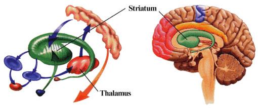 Болезнь Паркинсона. Почему  ранняя диагностика затруднена?
